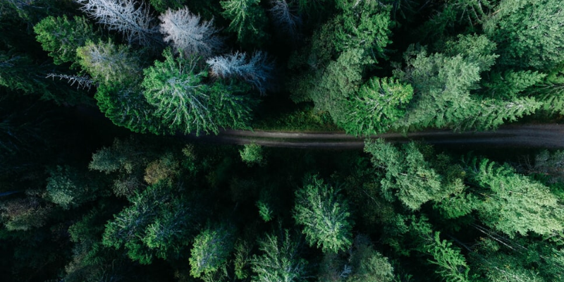 drone view on a forest