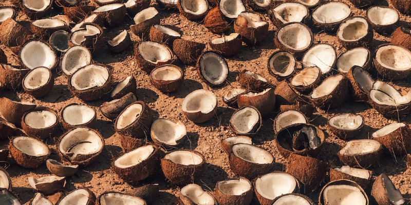 ground filled with halves of coconuts