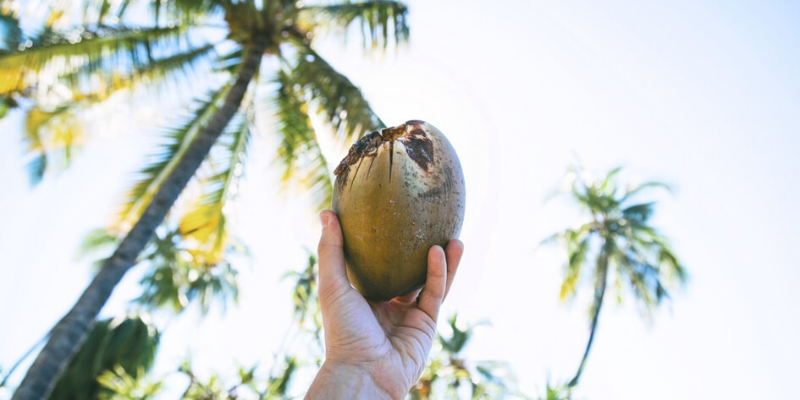 coconut in a hand, sky and palms on the background